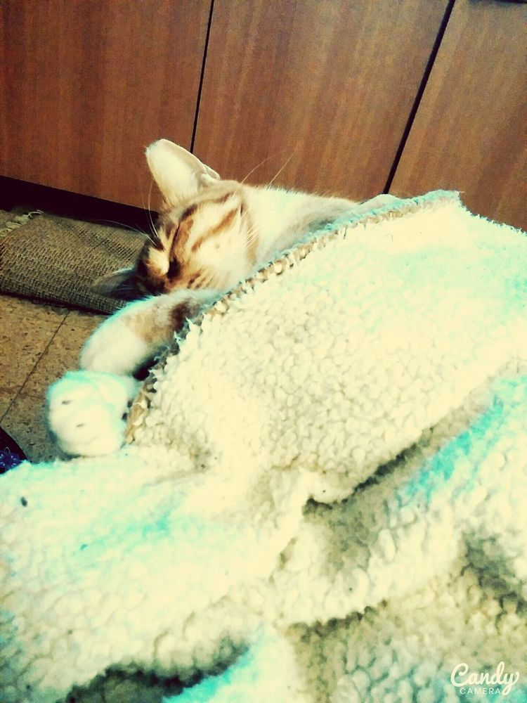 Cat♡ MYLOVE<3 Sooocute Swetycat