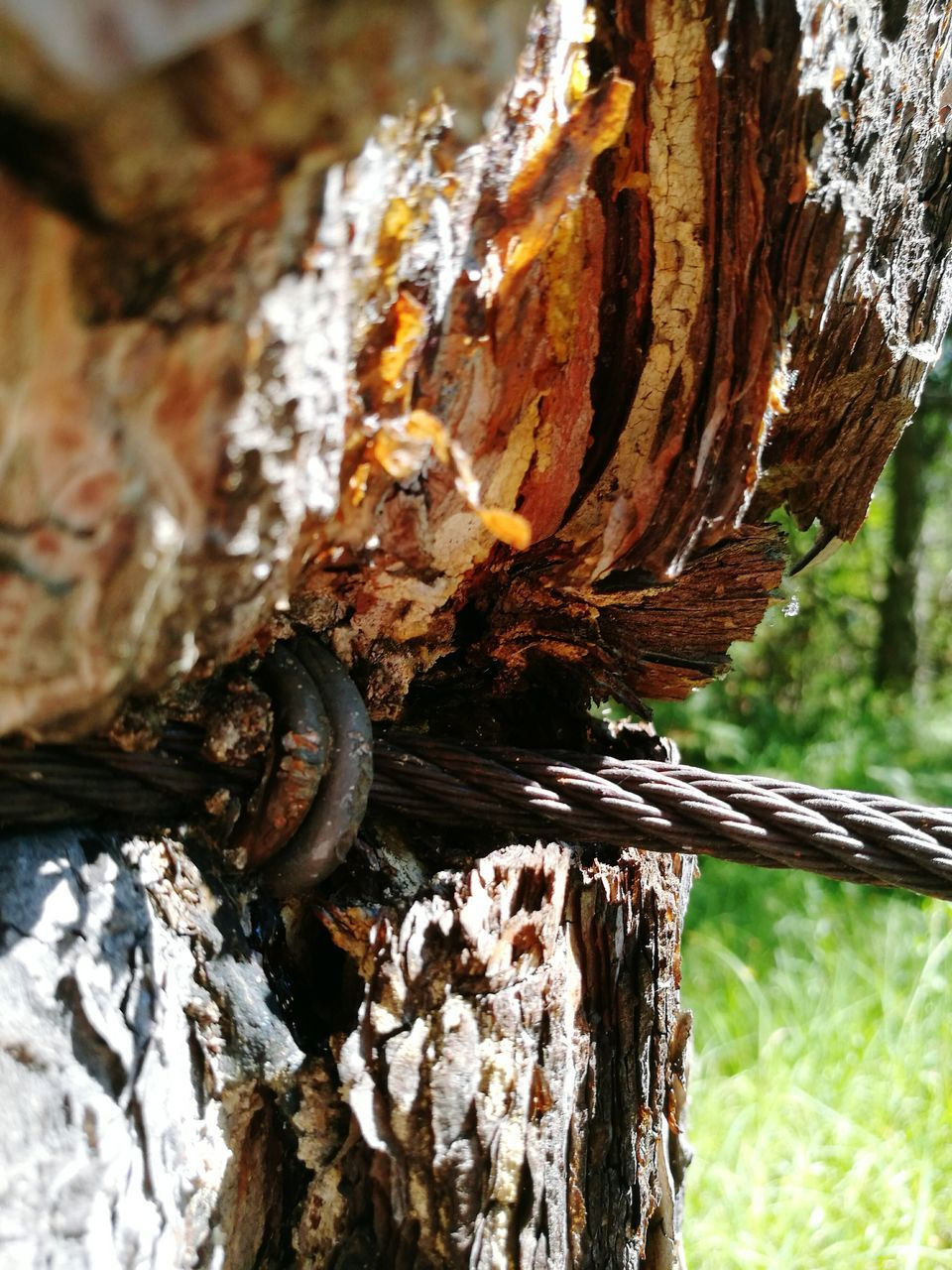 tree trunk, tree, textured, rough, wood - material, day, no people, close-up, outdoors, weathered, bark, focus on foreground, nature, knotted wood, dead tree