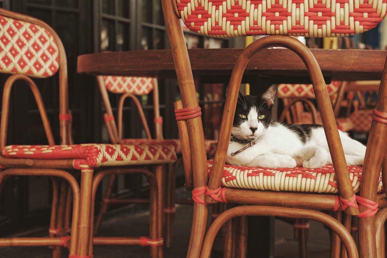 Beautiful stock photos of katzen,  Animal,  Animal Themes,  Cat,  Chair