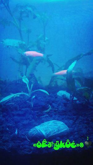 Keep moving.. Nature_collection Aquascapeindonesia Aquascape Photo♡