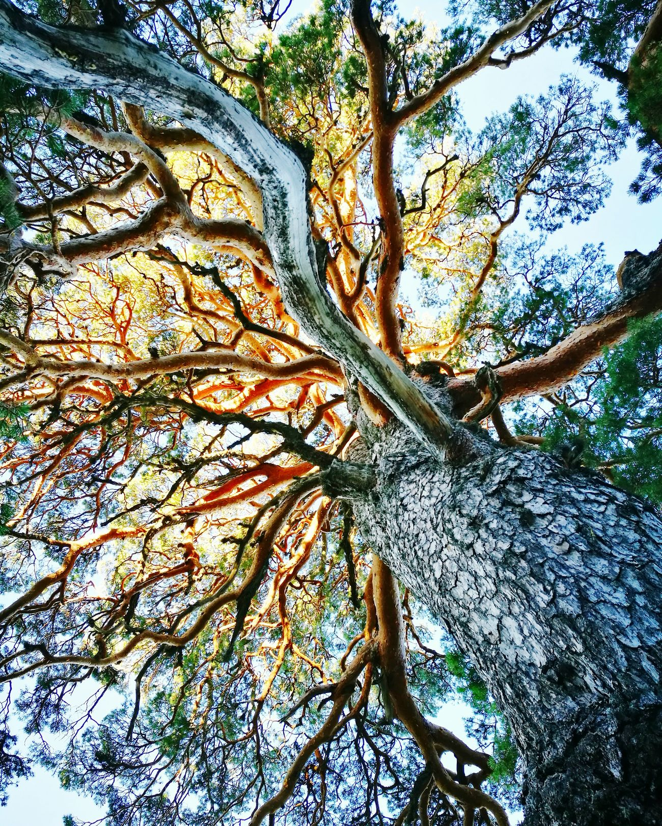 La grandeza de la naturaleza Nature First Eyeem Photo
