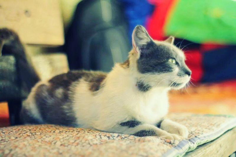 Cat Fıstık Animals Nature_collection Eyem Best Shots Kedicik Cat♡ Cool Stuff Sektör Yapım Cool Stuff