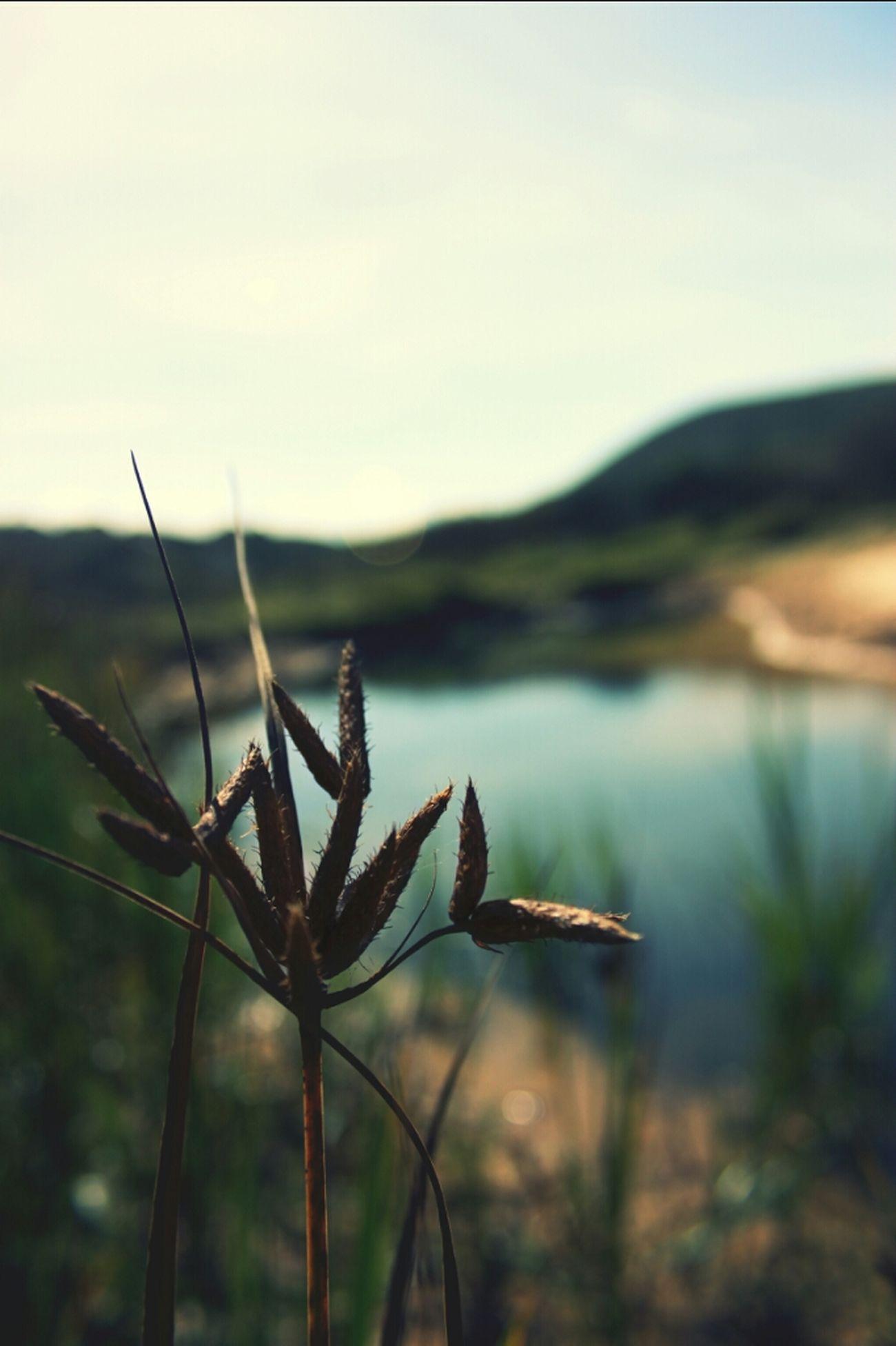 Nature Taking Photos Colors WeAreJuxt.com Plants Lake Shootermag Priceless EyeEm Nature Lover