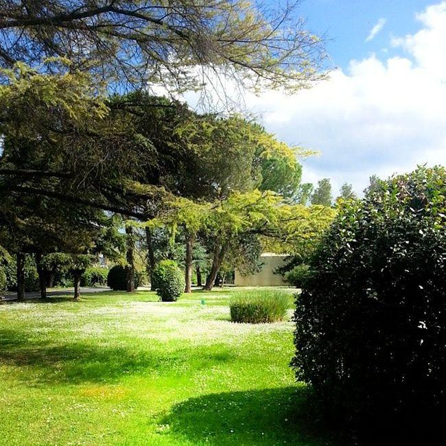 Garden in my factory Garden Spring Dayco Europe Tree Abruzzo Chieti Igers_pescara Iger_abruzzo