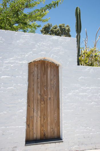 Rustic wooden door in whitewashed limestone brick building exterior. Architectural Detail Architectural Feature Architecture Brick Building Exterior Built Structure Carpentry Close-up Craftsmanship  Door Doorway Fremantle  Historic Limestone Outdoors Paint Rustic Saguaro Cactus Sunlight Tree Western Australia White White Washed Wood - Material Wooden