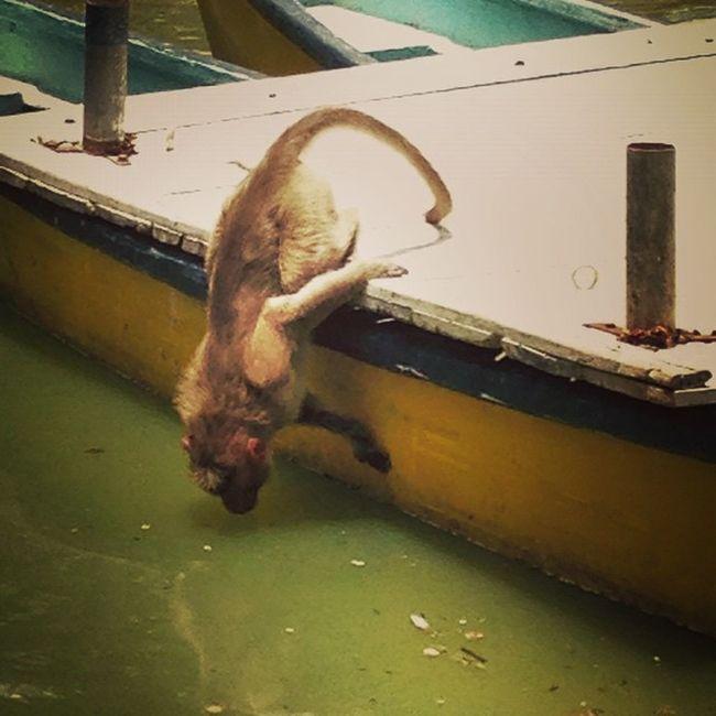 Summer Monkey Water IPhone Instapic Travel Namma_bengaluru Namma_karnataka Nammakarnatakamemes Nikon_on VSCO Vscocam Instaiphone Instatravel Iris Instagram Instalove