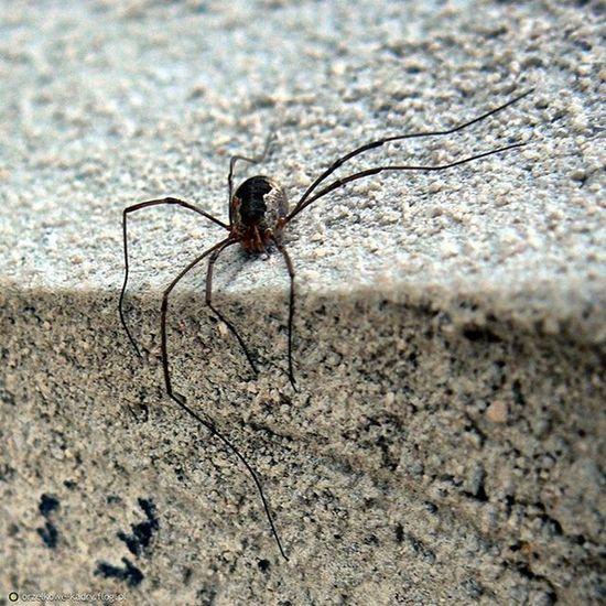 Spider Kosarz Photographer📷 Photoblogger Photography Photo Macro Macrophotography Spiderphobia Like4like Likeforlike L4l Followforfollow Follow4follow F4F Instagramers Instaspider