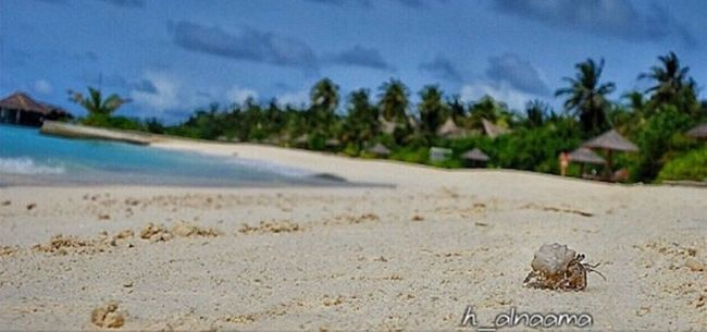 Where Do You Swarm? Beach Maldives Tadda Community Summer