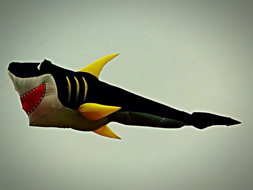 Drachenfest Drachensteigen Hang Gliding