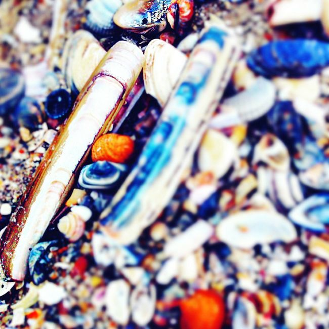 Relaxing Sea From My Point Of View Eyemphotography Beach Photography Taking Photos Enjoying Life Sea Shells Broken Shells