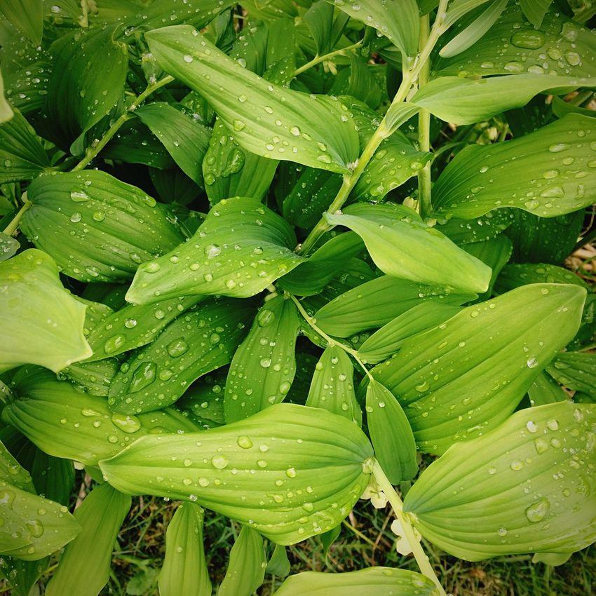 Не свойственное мне фото))) Check This Out Hanging Out Relaxing Taking Photos Enjoying Life Naujoji Akmene Lithuania Lietuva After The Rain Water Drops