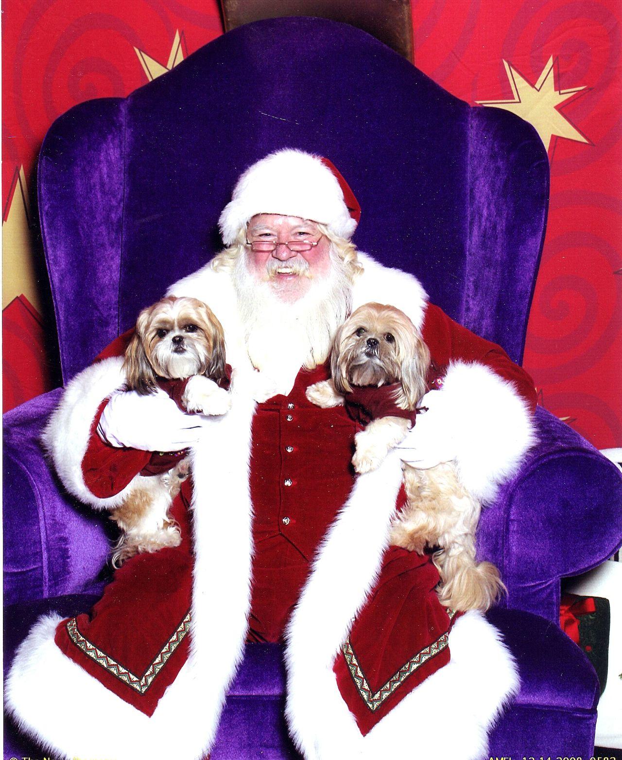 Christmas Santa Claus Puppies! Cute Pets Adorable Dog Jolly Santa Happiness ♡