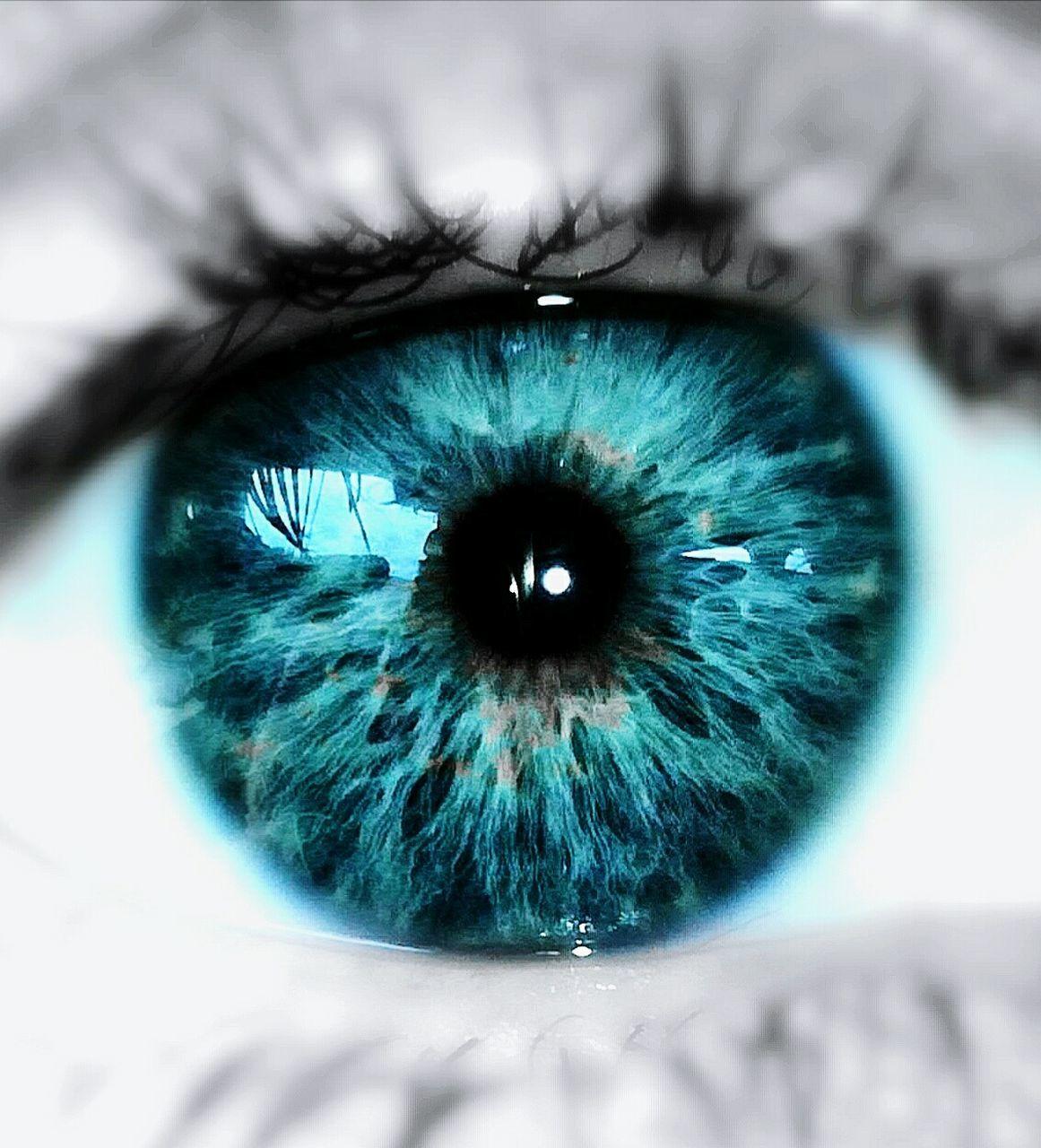 human eye, eyelash, blue, human body part, sensory perception, one person, eyeball, real people, iris - eye, close-up, eyesight, looking at camera, day, indoors, people