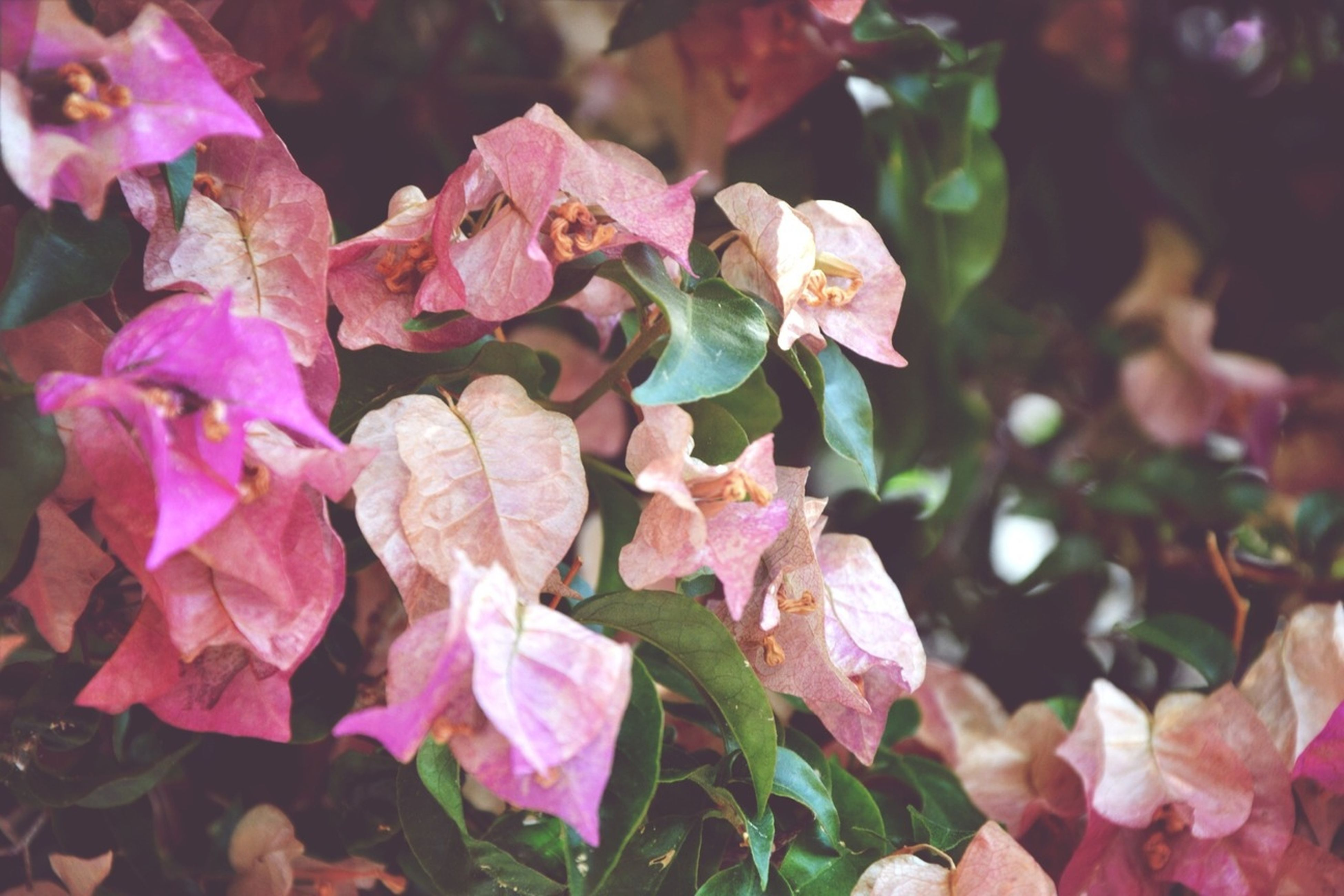 growth, leaf, fragility, flower, beauty in nature, freshness, nature, close-up, pink color, focus on foreground, season, petal, plant, autumn, day, outdoors, change, leaves, no people, selective focus