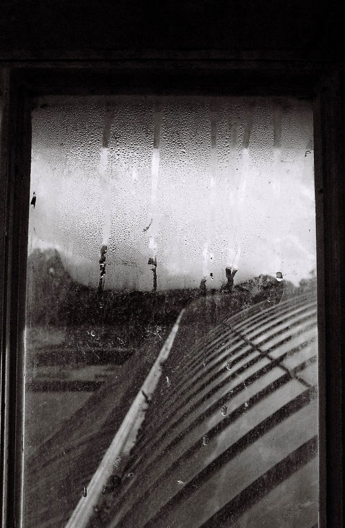 35mm Film Analogue Photography Architecture Black & White Close-up Condensation Converging Lines Day Droplets Hot House Kew Gardens Looking Through Window No People Palm House, Kew Gardens Steamy Window Structure Water Wet Window