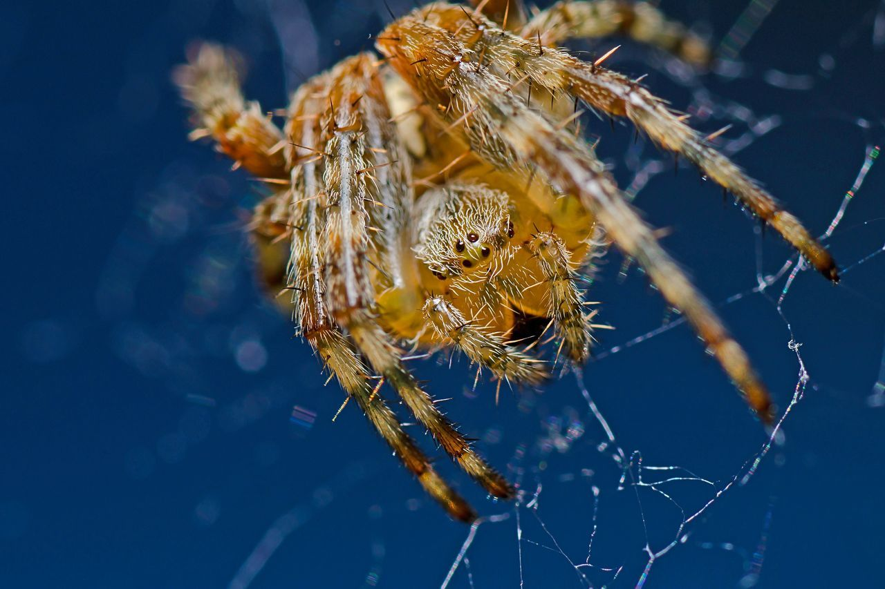 Beautiful stock photos of spider's, Animal Themes, Animals In The Wild, Beauty In Nature, Close-Up