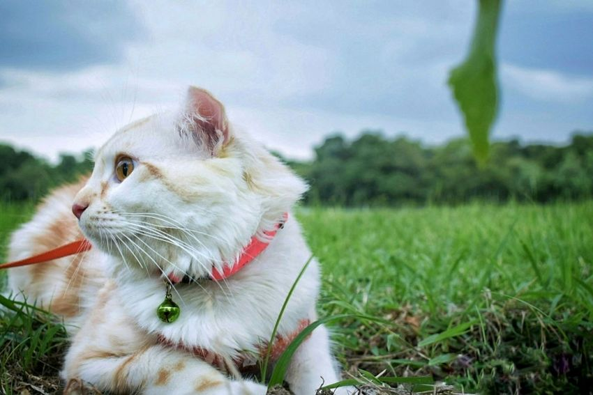 Cat Cat Lovers Cat Cute Pets One Animal Domestic Cat Domestic Animals Animal No People Portrait Animal Themes Outdoors Day Mammal Close-up Nature Sky Pet Portraits