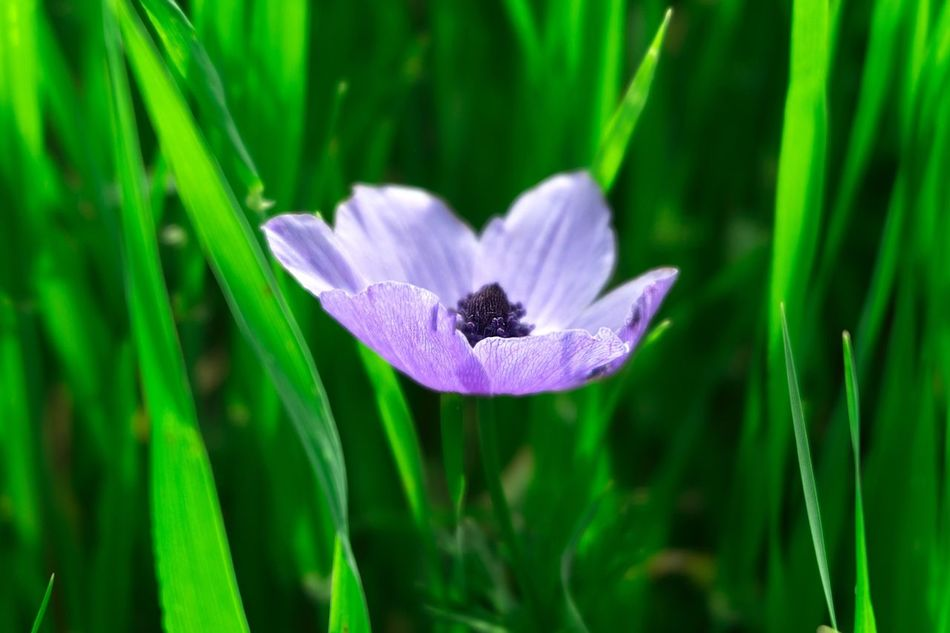 Flower Fragility Nature Freshness Growth Beauty In Nature Petal Plant Purple Flower Head Green Color Close-up Blooming No People Outdoors Day