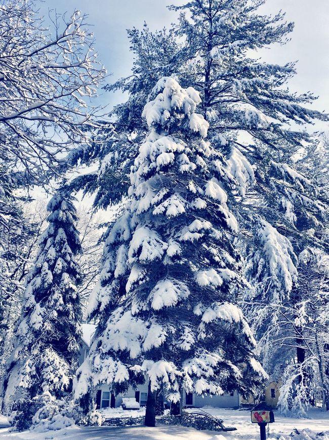 Vintage Forrest Vintage Woods Vintage Tree Old Man Winter Spruce It Up Vintage Style Blizzard Showcase: Feburary