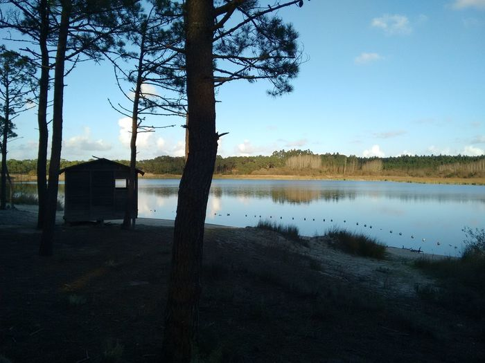 Cabin In The Woods Cabin Woods Lake Lakeshore Lake View Portugal Pine Trees Pine Tree Nature Leiria Portugal Amazing View Late Afternoon Going For A Walk Walk Through The Woods Nofilter No Filter :) Photowalk