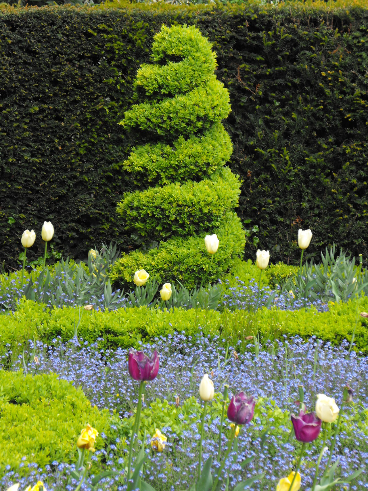 A view of a public garden from a few years ago Day Delicious Display Evergreen Flores Flower Forget Me Not Freshness Garden Garden Art Gardening Grass Green Color Growth Hedge Jardin No People Outdoors Plant Shape Spring Topiary Topiary Art Tulips Uk