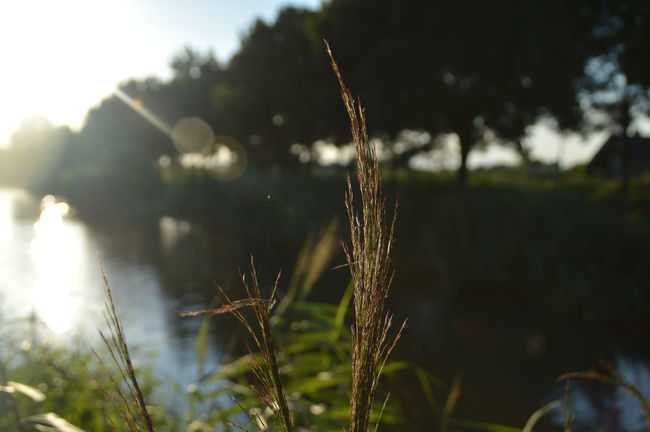 Plants along the water Beauty In Nature Day Focus On Foreground Growth Landscape Nature No People Outdoors Plant Reflection Sky Sunbeam Sunlight Twig Water Water Reflections Weather