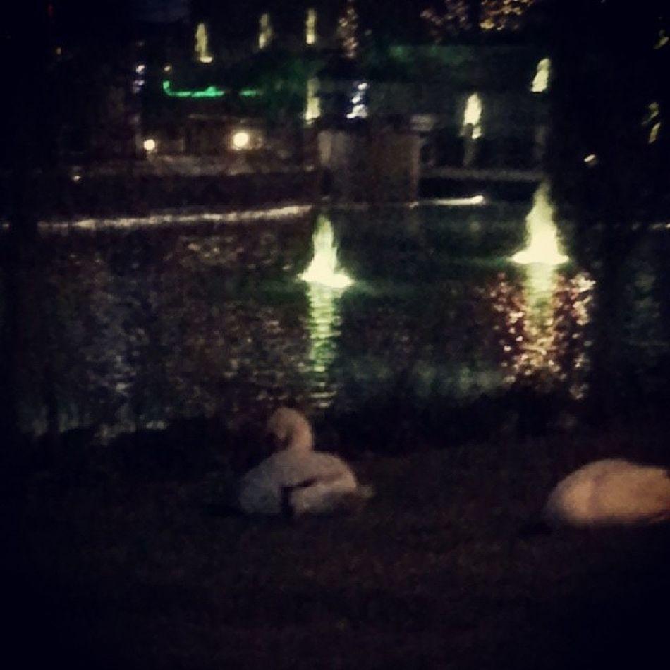Sahiden Kugugolu ne gittik! :)) Friends Joy Happiness Animal Swan Swanlake IGDaily Instagramers Instagood Nature