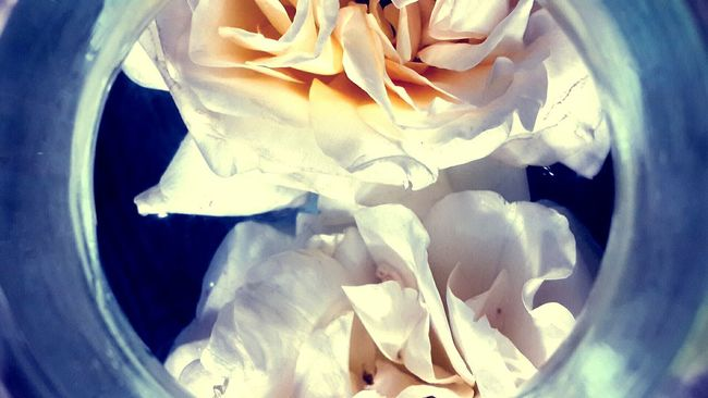 Flowerporn Roseporn Rose🌹 Showcase: January Bouquet In A Bottle Old School Romance Cremecaramel Black Ant