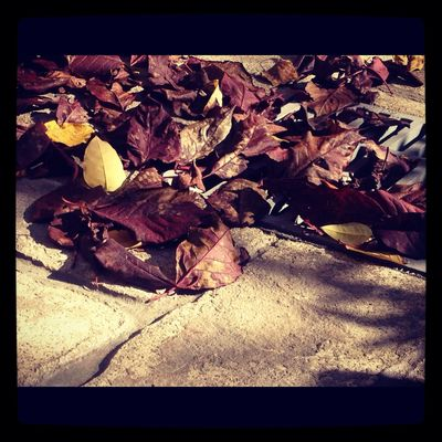 leaves in Laurel by Coro