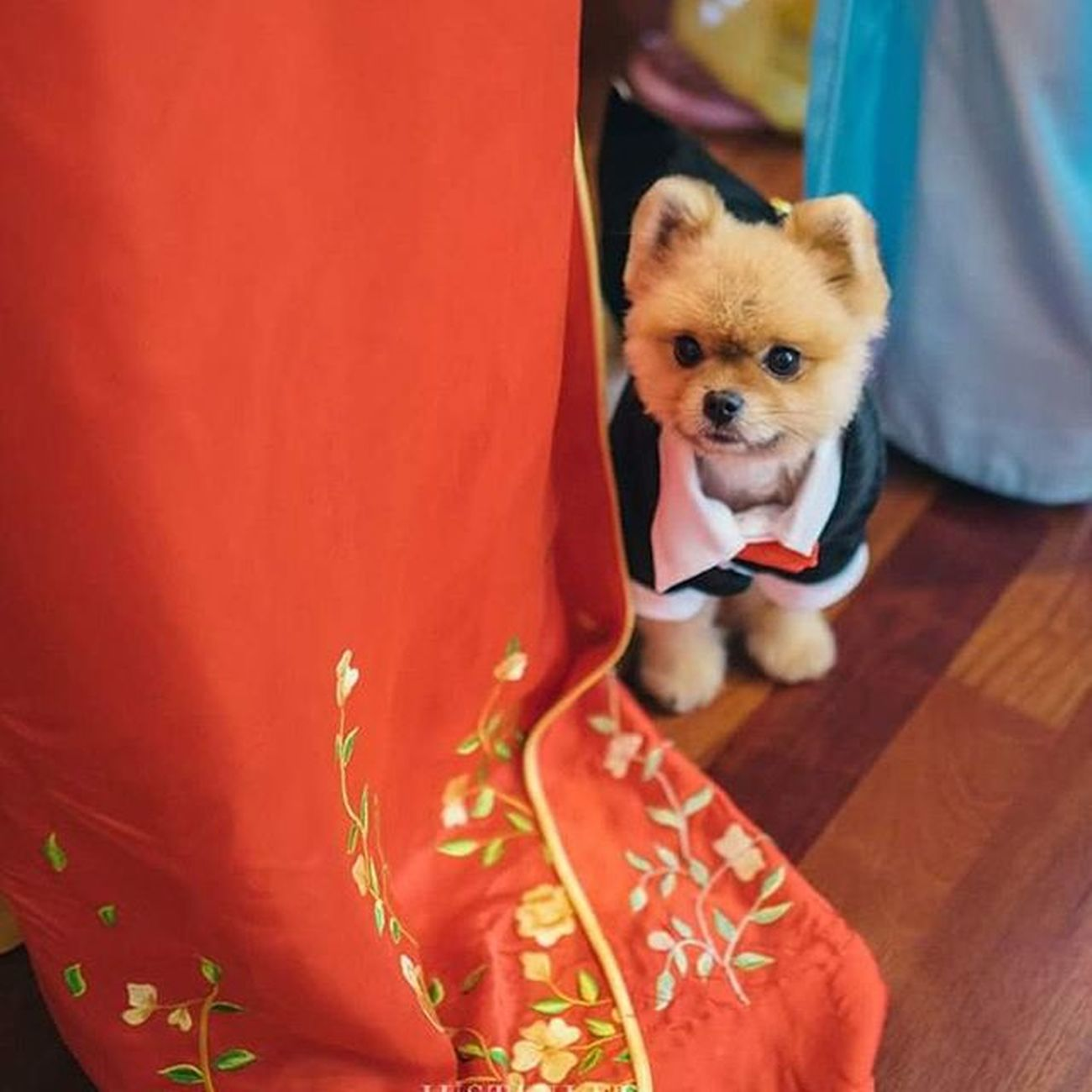 Not a stuffed animal......! This handsome dog had to maneuver his way through the crowd of a busy wedding morning Justinleeportland Oregonbridemag Junebugweddings Portlandphotographer Portlandweddingphotographer Portlandwedding Pdxweddings Oregonwedding Oregonweddingphotographer Portlandbride Portlandengagement Nwweddings Nwbrides Portlandbrideandgroom Oregonbride Justinleeportland Puppy Pomeranian Dogs Animaladdicts
