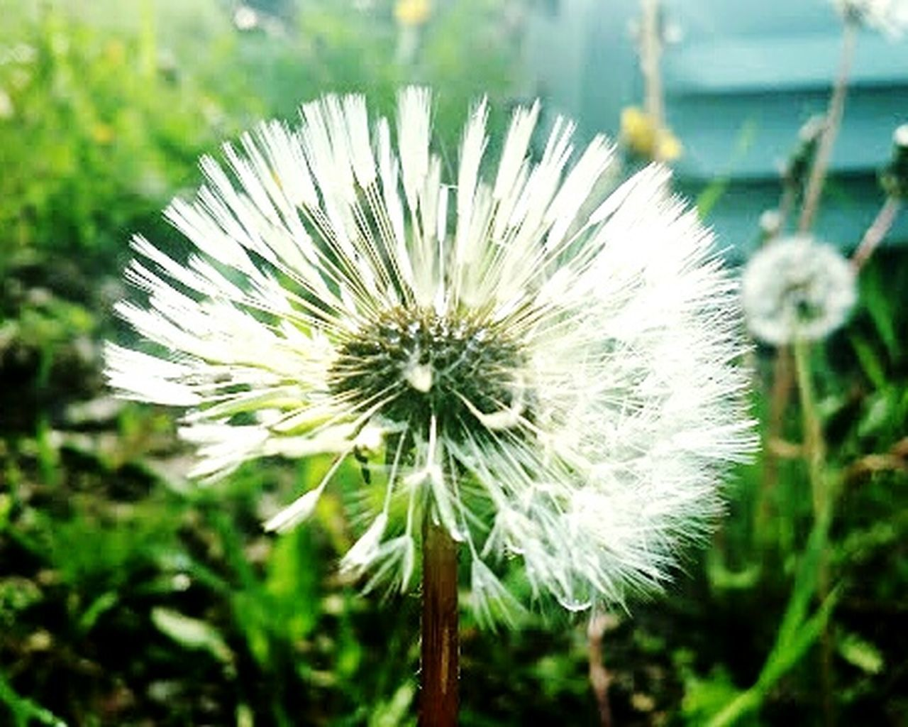 flower, nature, fragility, focus on foreground, flower head, close-up, growth, plant, beauty in nature, no people, outdoors, day, freshness