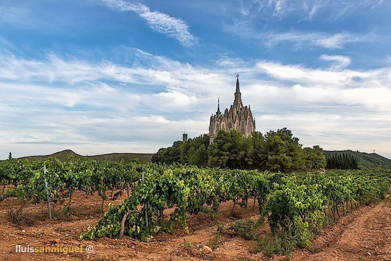 Nature Catalonia Landscape Clouds Color Vines
