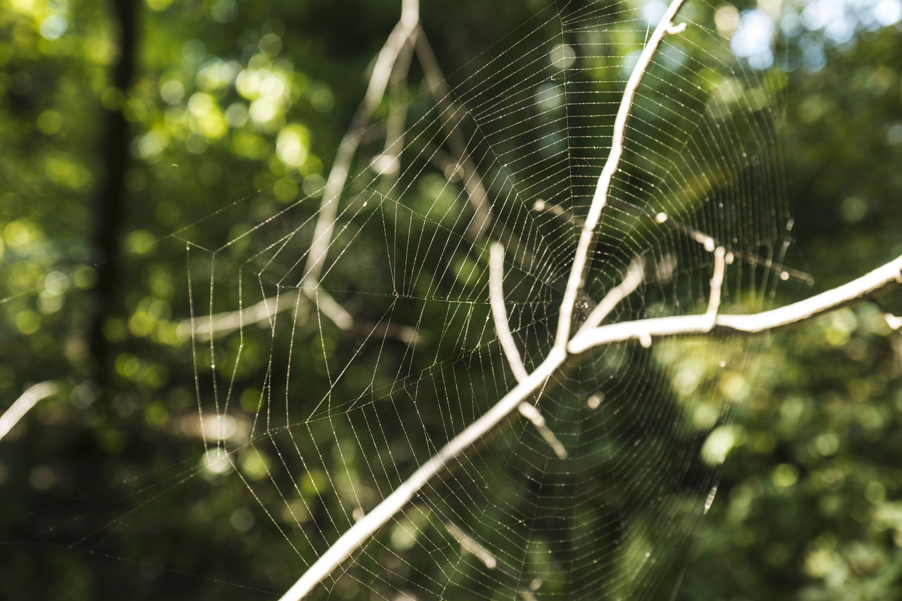 © FS Moments Animal Themes Art Is Everywhere Beauty In Nature Bokeh Photography Bokehlicious Colorful Nature Day EyeEm Best Shots EyeEm Nature Lover Nature Photography Nature_collection Spider Web Spiderworld