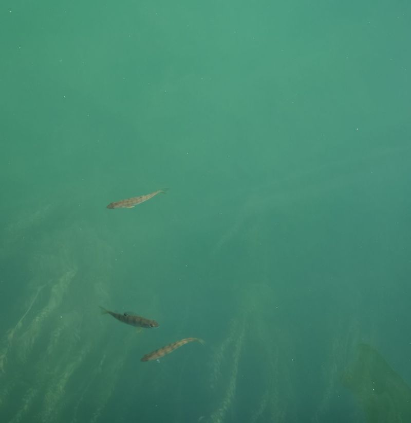 Beauty In Nature Fish Fishes In The Lake Of Zürich Hello World I Don't Know The Name Of Album Lake Nature Small Fishes Swimming Switzerland Switzerlandpictures