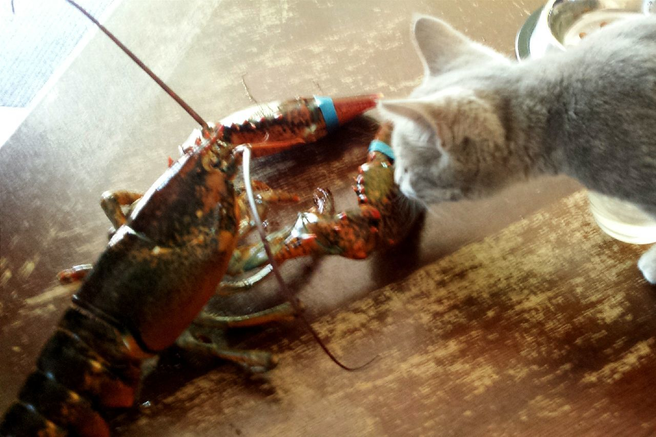 Taking Photos Check This Out Cheese! My Dinner:) Lobsters 🍤🍲 My Cat ❤ Dinner For My Cat🐈 Newfriend Newfriends Friendship Friends Time Friend ✌ Hi!