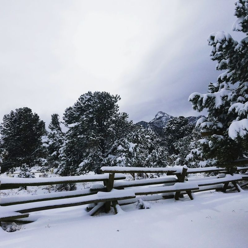 Snow Tree Cold Temperature Winter Nature No People Tranquility Outdoors Sky Day Beauty In Nature Snowing Nevada, USA Mountainscape Mt Charleston