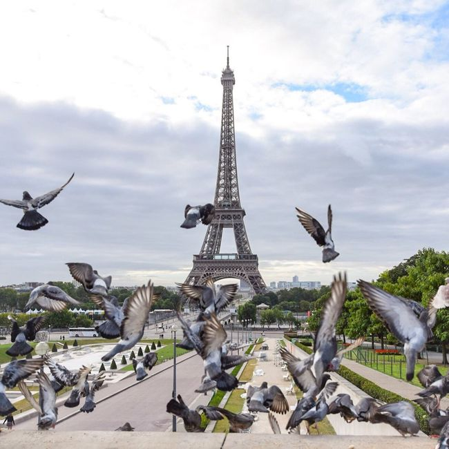 Breakfast with the pigeons! Bonjour Paris Parisweloveyou Clouds And Sky Eyem Best Shot - Architecture Photooftheday EyeEm Best Shots Paris Paris ❤ Tour Eiffel Eiffel Tower