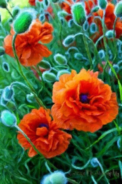 Mohnblumen . Oil on canvas 100 x 80 cm 2014 Art Painting Nature Flowers Still Life Colours Summer ☀