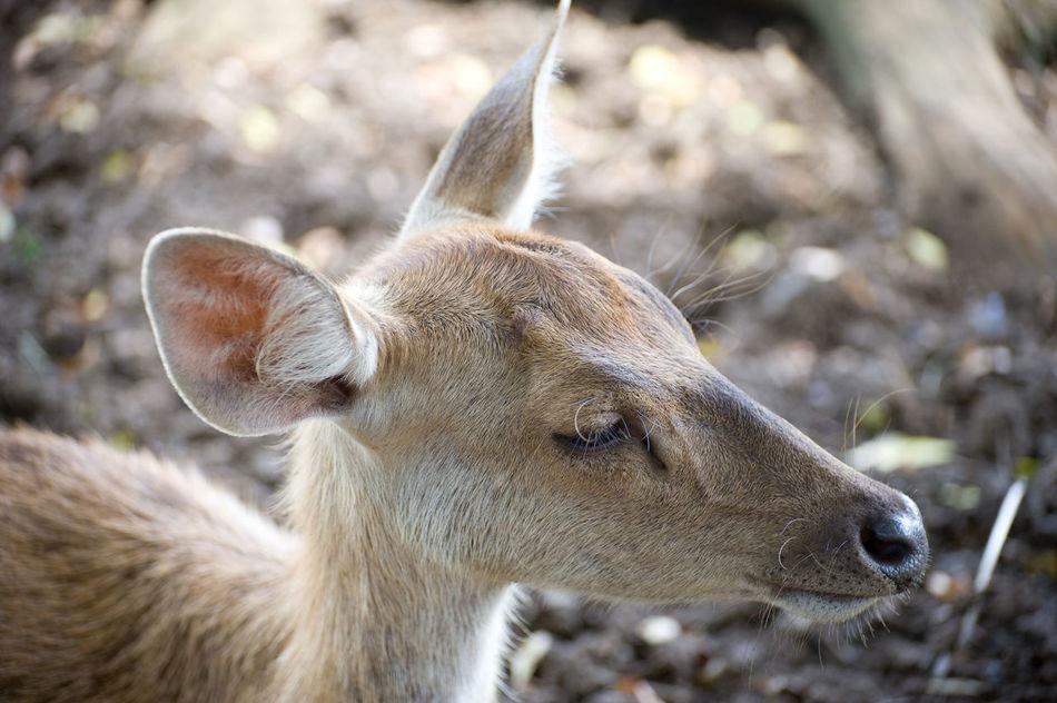 Beautiful stock photos of deer, , Animal, Calm, Deer