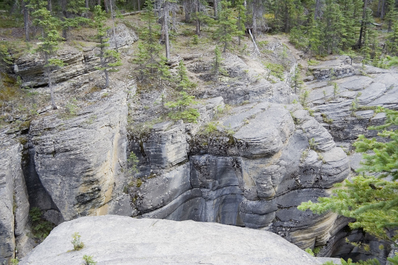 sedimentary rocks of mistaya canyon - banff national park, canada Banff National Park  Beauty In Nature Canada Canadian Rockies  Canyon Carved Cliff Coniferous Tree Eroded Gorge Hole Limestone Mistaya Canyon Natural Pattern Nature No People Power In Nature Ravine Rock Rock - Object Rock Formation Rocky Mountains Rough Sedimentary Sedimentary Rock