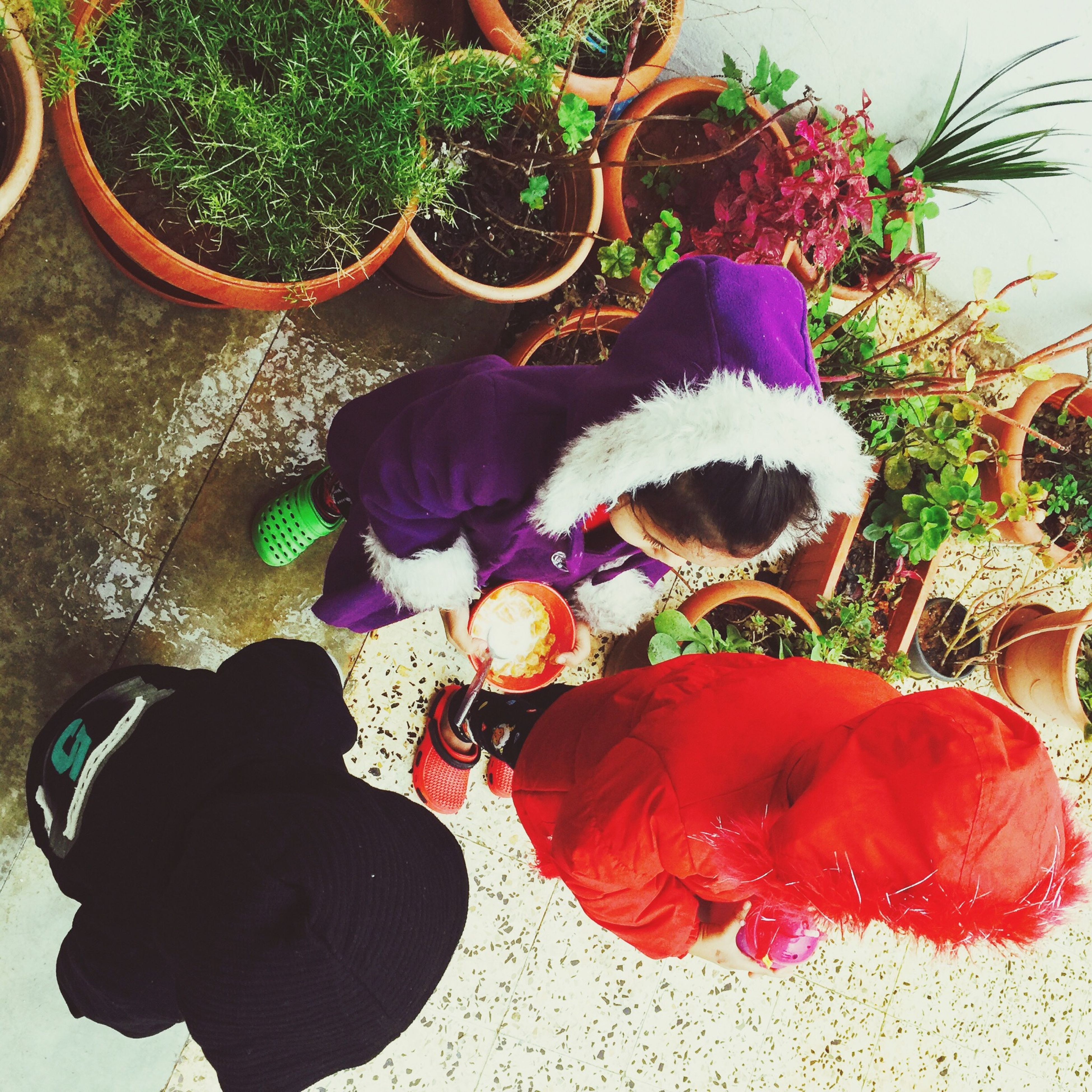 plant, flower, potted plant, leaf, day, growth, outdoors, men, lifestyles, high angle view, street, freshness, sunlight, red, leisure activity, person, multi colored, nature