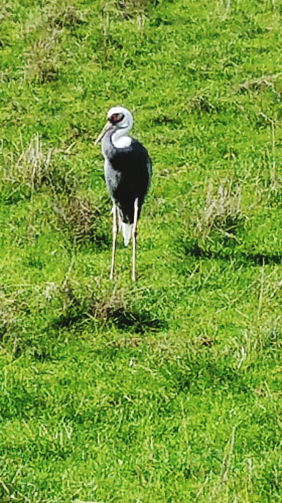 Wild Bird Animals In The Wild