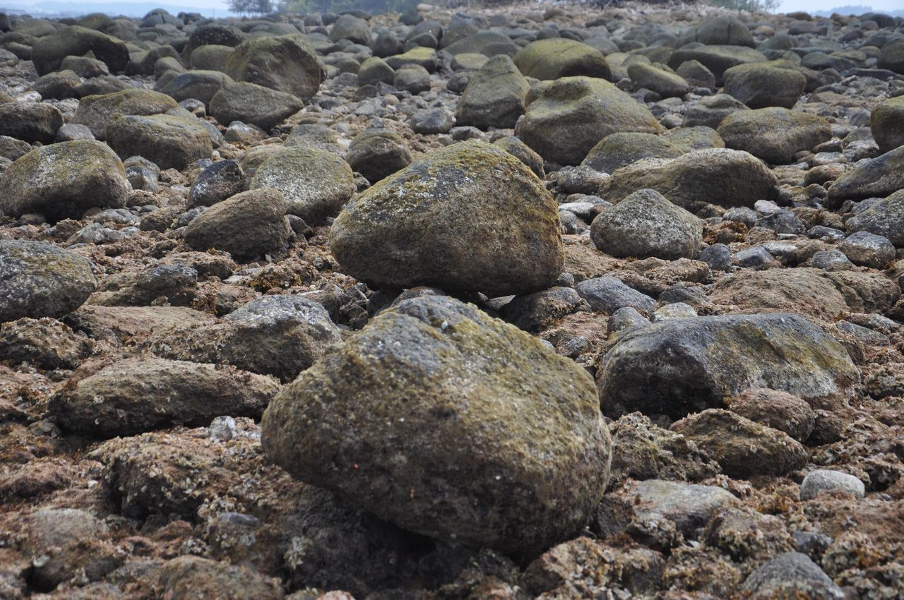 pebble, rock - object, shore, no people, beach, full frame, pebble beach, nature, backgrounds, close-up, sea, outdoors, day, water, animal themes
