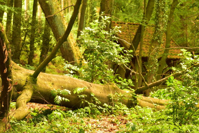 Bulbphotography Bulbs Bulb Nikonphotography Nikon D5500 Nikon Forest Forest Collection