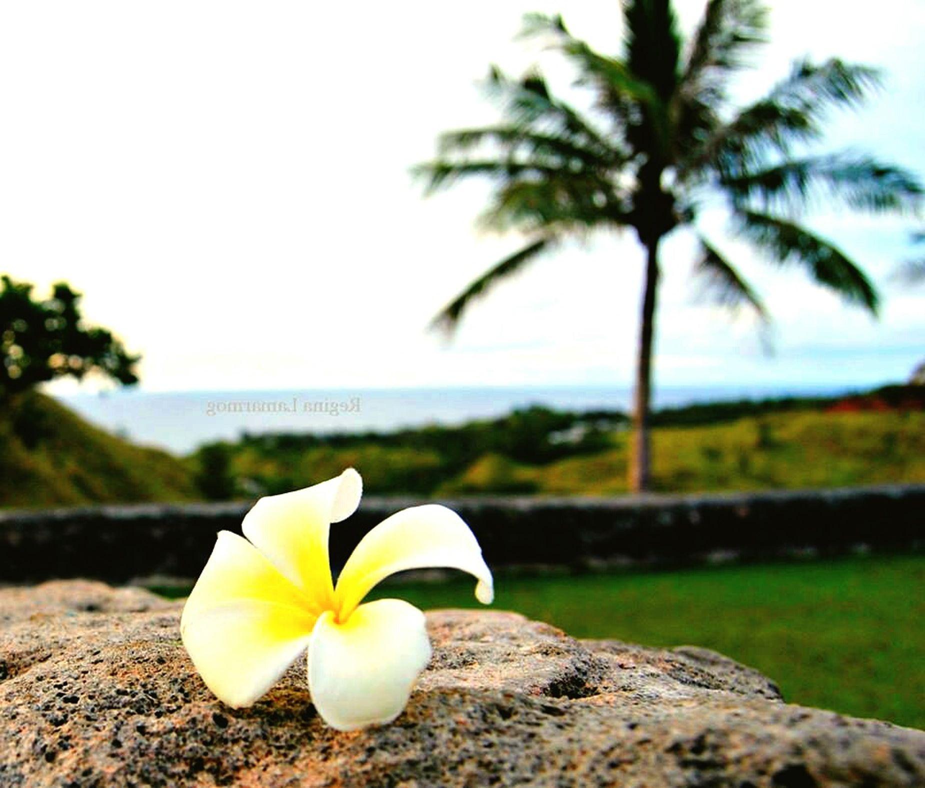 Island beauty Islandlife Isandliving Beautyofislandliving SouthBound Blessedeveryday Islandgirl Wheremyheartis