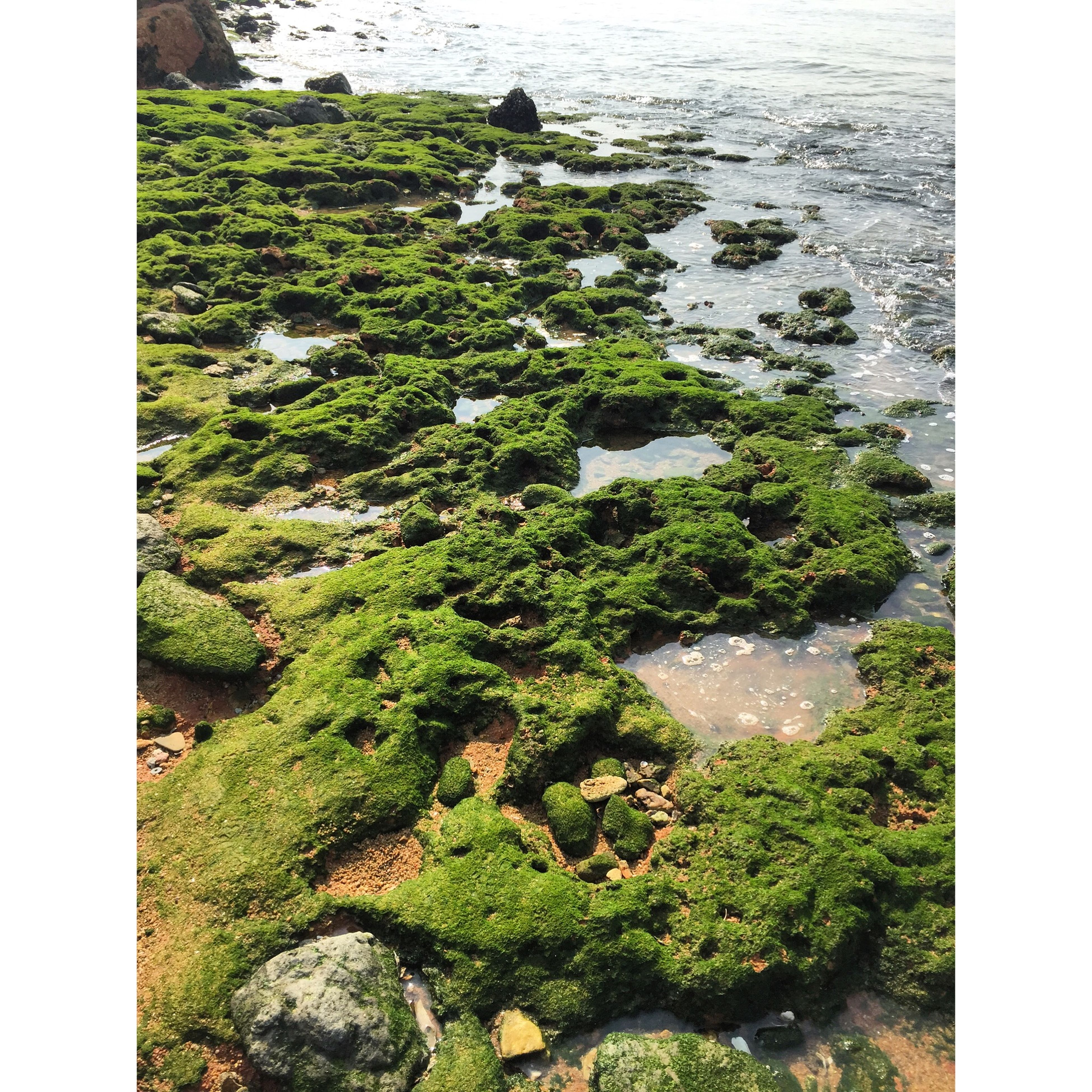 transfer print, auto post production filter, water, rock - object, high angle view, green color, moss, nature, rock, tranquility, beauty in nature, plant, growth, day, tranquil scene, scenics, outdoors, stone - object, no people, elevated view