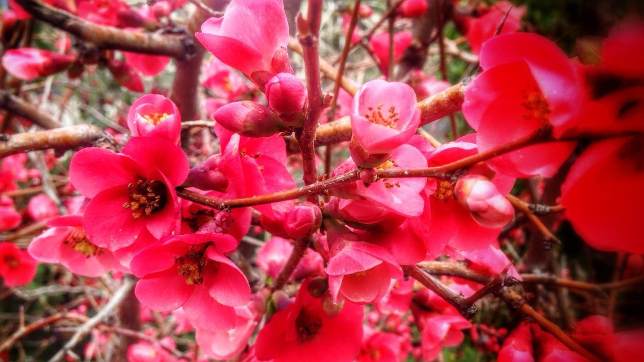 Close-Up Of Red Flowers Blooming On Tree