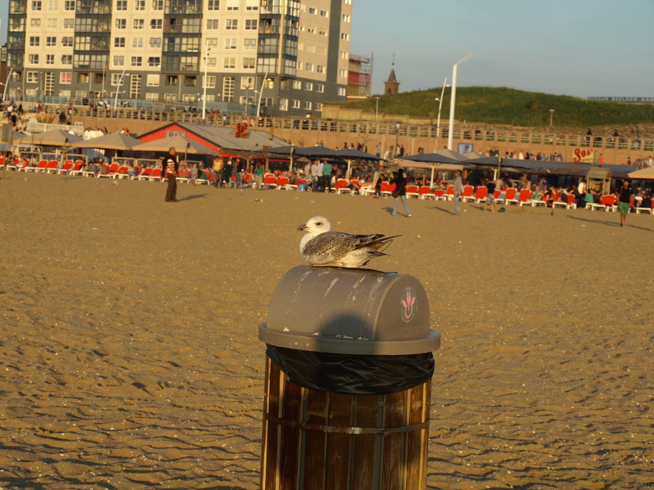 Architecture Beach Bird Building Exterior Built Structure City City Life Day Netherlands Outdoors Person Sand Scenics Scheveningen  Scheveningen Boulevard Scheveningen Pier Scheveningen Promenade Scheveningenbeach Sea Shore Summer Togetherness Tranquility Vacations Water