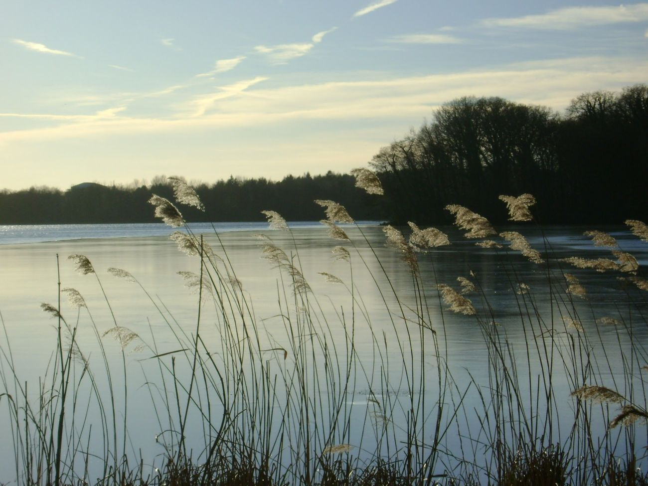 calm winterday Beauty In Nature Calm Cloud Cloud - Sky Day Grass Growth Lake Lakeshore Nature Outdoors Plant Sky Standing Water Water Welcome Weekly