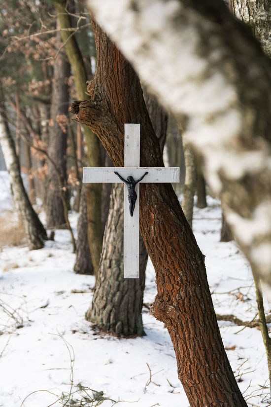 A Symbol Of Christianity Advent Ascension Catholicism Christianity Cross Crucifixion Easter Eternal Life Forest Hope Jesus Jesus On The Cross Nature Old Cross Road Cross Rebirth Religion Resurrection Salvation  Scandinavian Style The Catholic Church The Cross On The Tree The Symbol Of The Catholic Faith Trees Winter